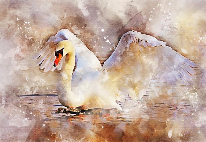 swan-2893562_1920